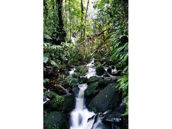 Dominica is known for its green landscape and rivers.