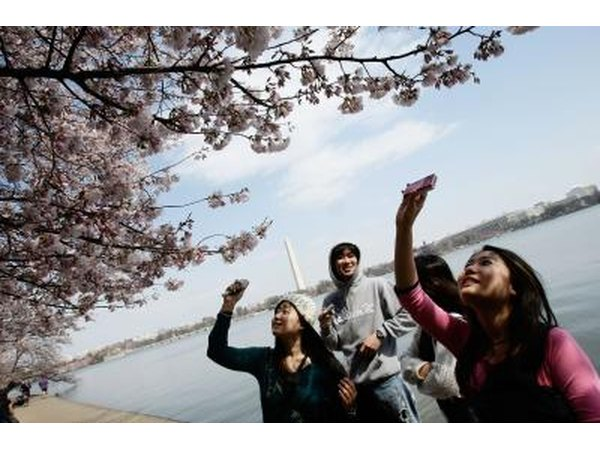 Students photographing cherry blossoms in Washington, DC
