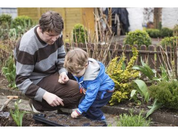 Father and son planting vegetables in their garden