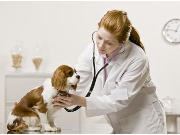 Bring your dog to the vet as soon as possible.