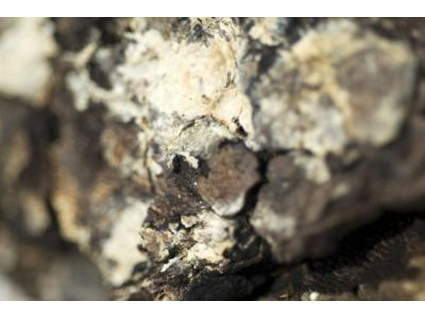 Close-up of white tree mold on bark