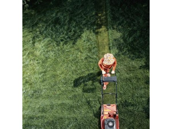 Know which variety of St. Augustine grass you have, as heights vary from 2 to 4 inches.