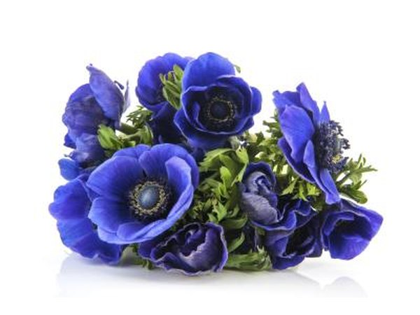 Use blue flowers.