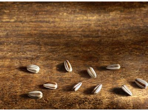 Sunflower seeds are very high in vitamin E.