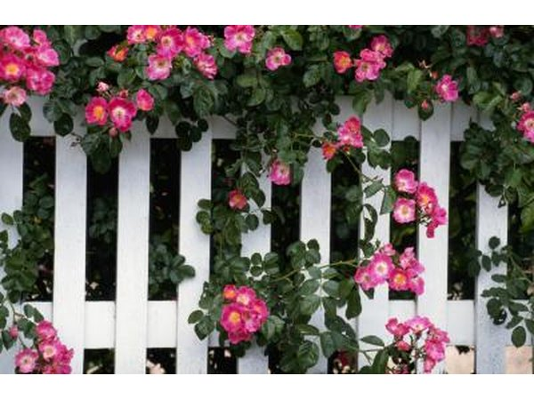 White picket fence covered with flowers