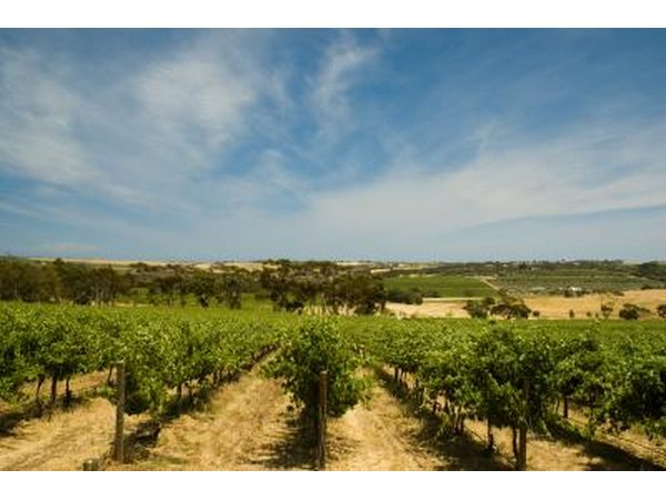 Vineyard near McLaren Vale, South Australia