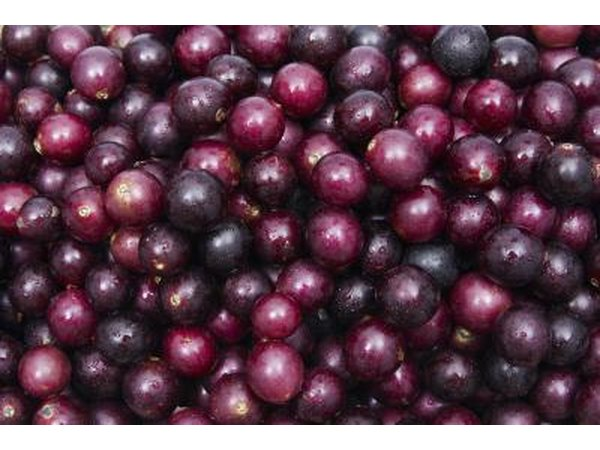 Close-up of muscadine grapes