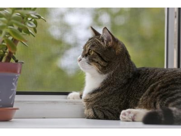 A cat sits on a sill near a plant and looks out the window.