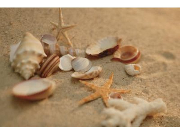 Decorate your home with seashell crafts.