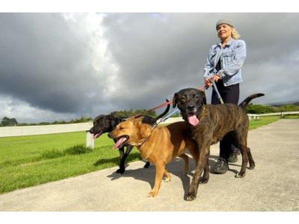 High Oxalate Foods Dogs