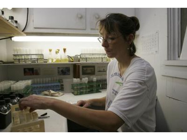 A marine life specialist conducts algae testing in a laboratory.