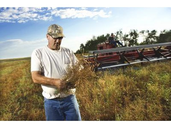 A farmer in a field inspects crops next to his plow