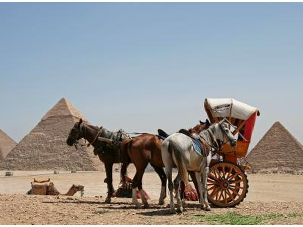 There are many different types of horses and carts all over the world.