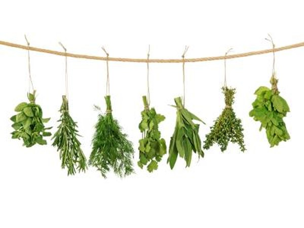 Fresh herbs hanging on a line.