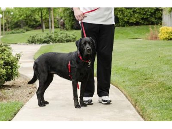 how to get therapy dog certification