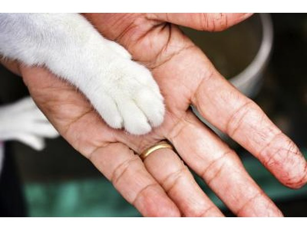 Cat paw on owner's hand.