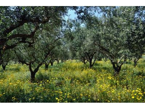 Greek native plants with pictures ehow - Flowers native to greece a sea of color ...