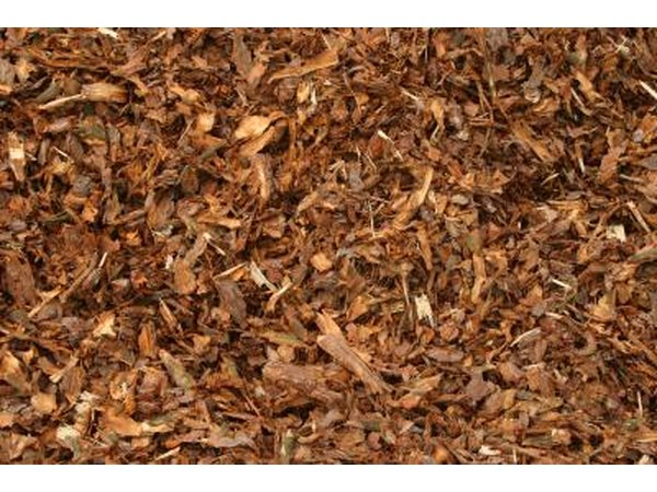 Include a layer of mulch to encourage moisture retention and limit weed outbreaks.