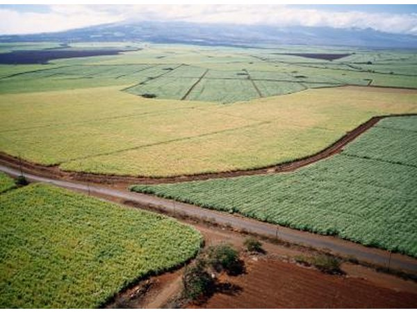 An aerial view of sugar cane fields.