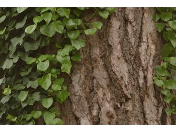 Plants That Stay Green Year Round With Pictures Ehow