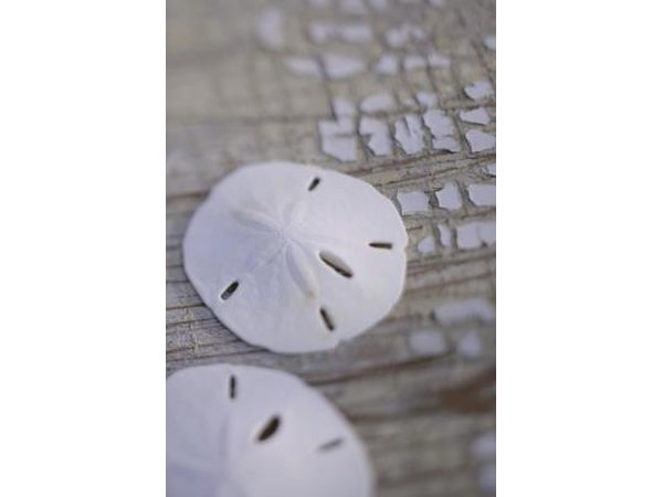 Sand dollars can also be incorporated into your seahell crafts.