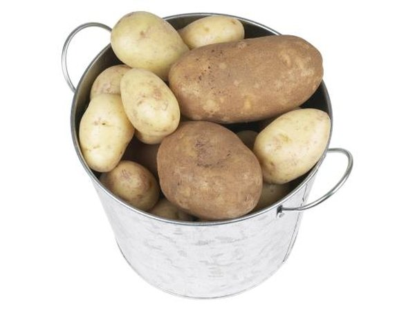 Russet potatoes work well in scalloped potato dishes.