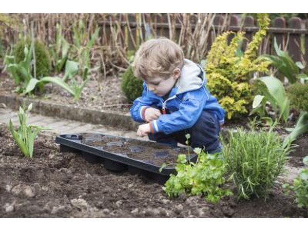 Young boy looks over recently planted vegetable garden