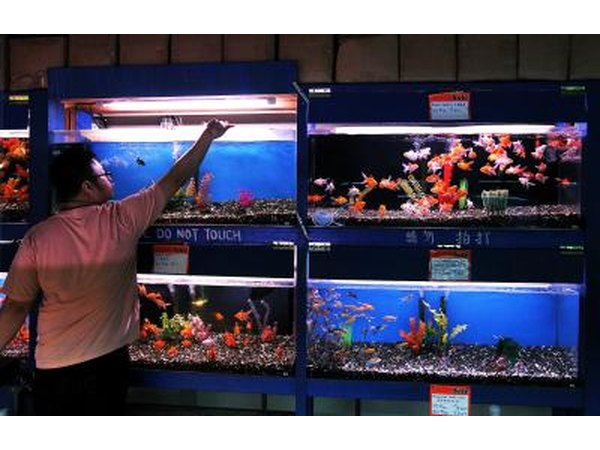 Feeding fish in pet store