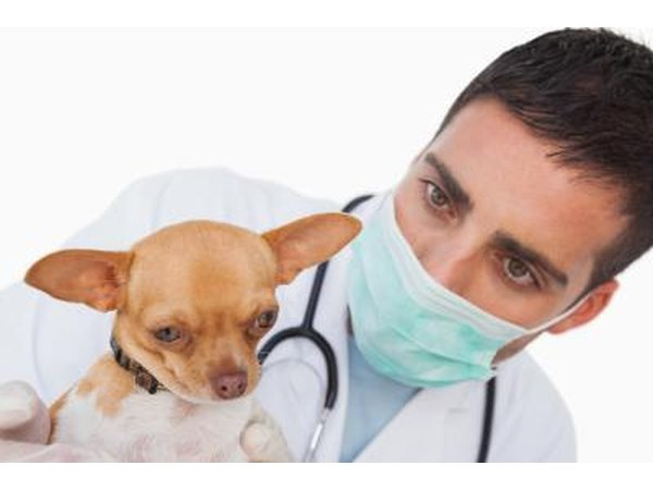 Veterinarian with dog.