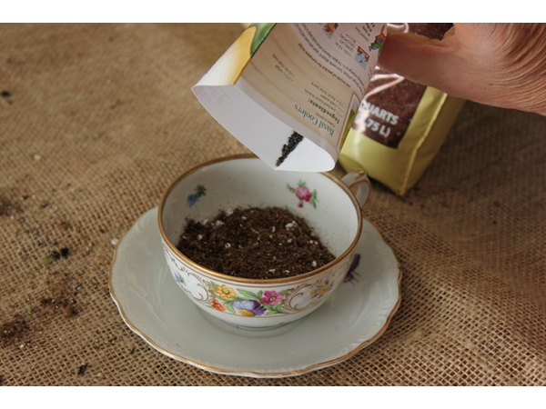 Pour seeds on top of soil.