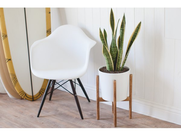 This chic yet classic plant stand owes its inspiration to another century.