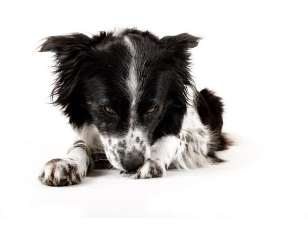 Epsom salt can benefit your pup in the same ways it benefits you.