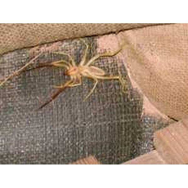 how to get rid of camel spiders