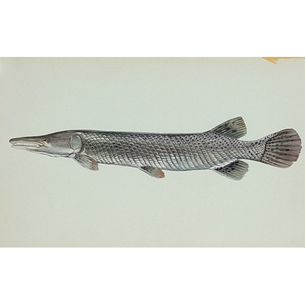 How to make gar fish lures out of nylon healthfully for Gar fishing lures