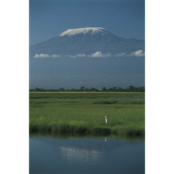 White egret , Mt. Kilimanjaro in background , Amboseli National Park , Kenya , Africa