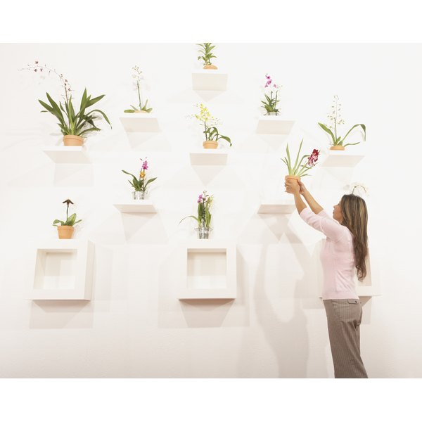 Businesswoman putting potted flowers on their shelf