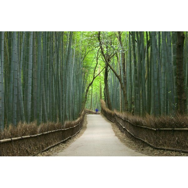 Path through bamboo forest, Kyoto, Honshu, Japan