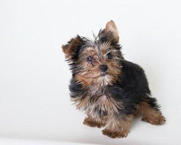 Porcupine Dog Toy