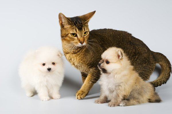 Can A Pet Cat And Dog Be Riends
