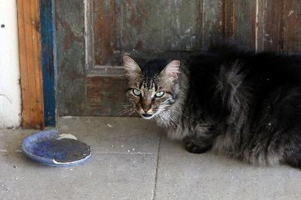 what causes cats to urinate outside of litter box