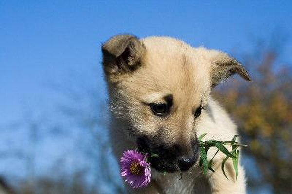Tips to Keep Dogs Out of Flower Beds - Pets