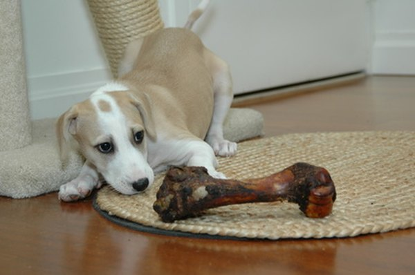how to stop your puppy from biting and chewing