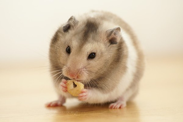 Trying to get a hamster?