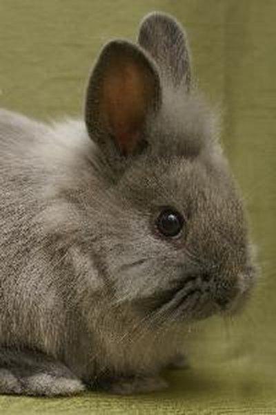 Rabbit caught mid-sneeze | HilariousGifs.com