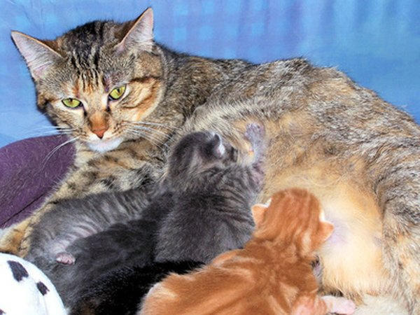 Will Cats Stop Nursing If You Feed The Kittens