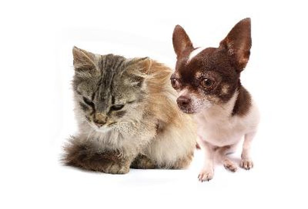 Can Cats Catch Colds From Dogs