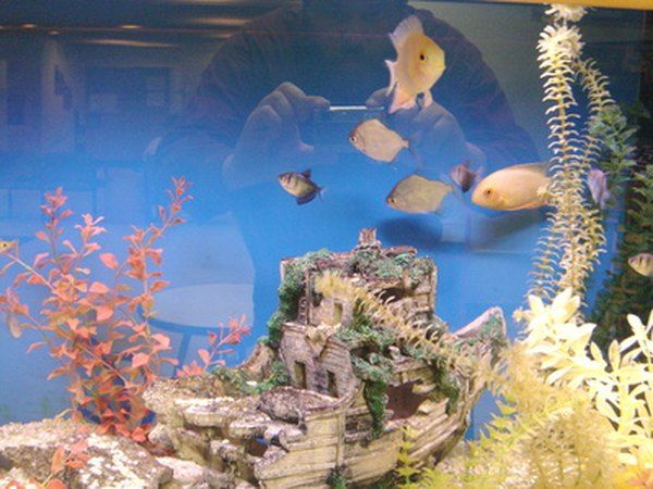 Feng shui tips location of a fish tank at home pets for Feng shui fish tank
