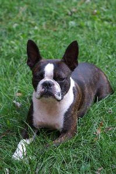 Dog With Onee Blue Eye