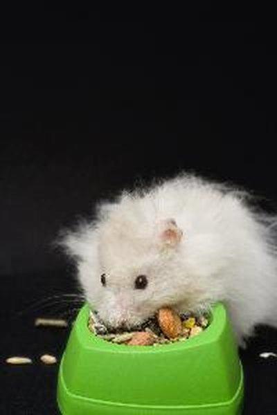 Baby Teddy Bear Hamster Facts | Animals - mom.me