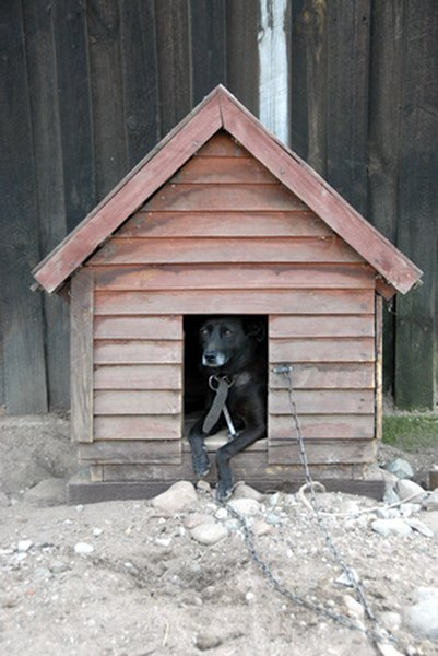 A doghouse is more comfortable for your pet when it has clean dry bedding.